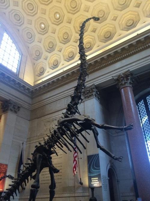 AmericanMuseumOfNaturalHistory